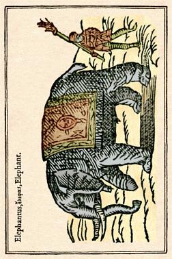 Elephant cadré light - copie