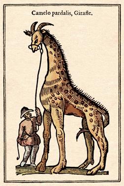 Girafe cadrée light - copie