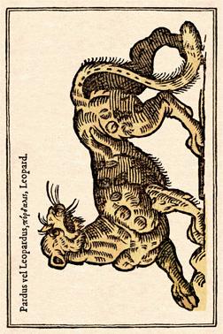 Leopard cadré light - copie