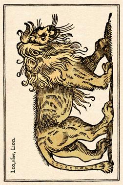lion cadré light - copie